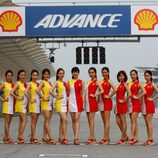 Paddock Girls del GP de Malasia 2015 - Shell