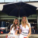 Paddock Girls del GP de la República Checa 2016 - Avintia