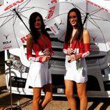 Paddock Girls del GP de Valencia 2016 - Givi