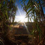 Neuville entre cañas de bambú