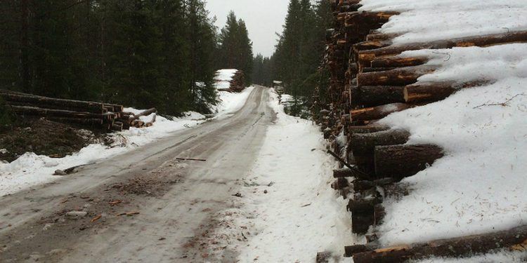 El Rally de Suecia sigue adelante con nieve o sin ella
