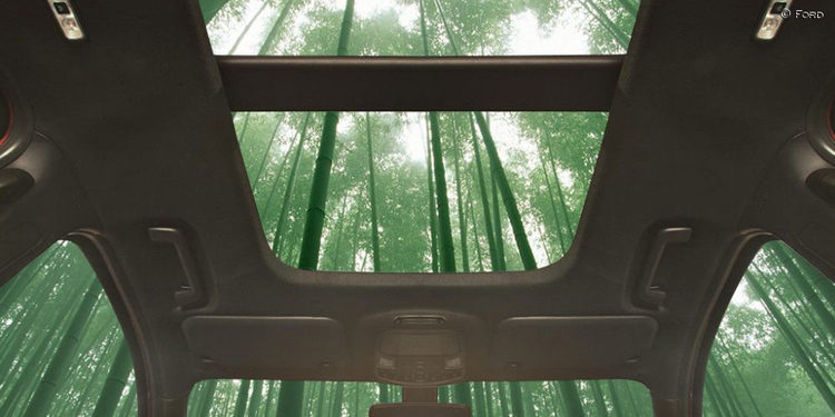 Ford planea utilizar el Bambú como materia prima