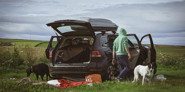 La forma correcta de trasladar las mascotas en el auto