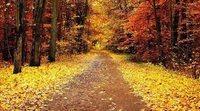 Peligros del otoño para los conductores