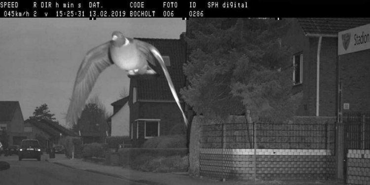 Radar alemán cazó a paloma a exceso de velocidad