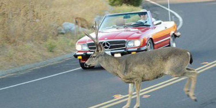 Cuidado conductor, atropellar a un animal es tu culpa