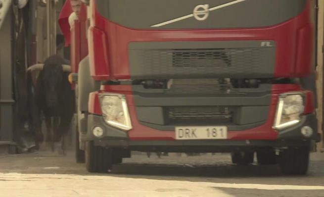 El Volvo FL contra ocho toros en Ciudad Rodrigo